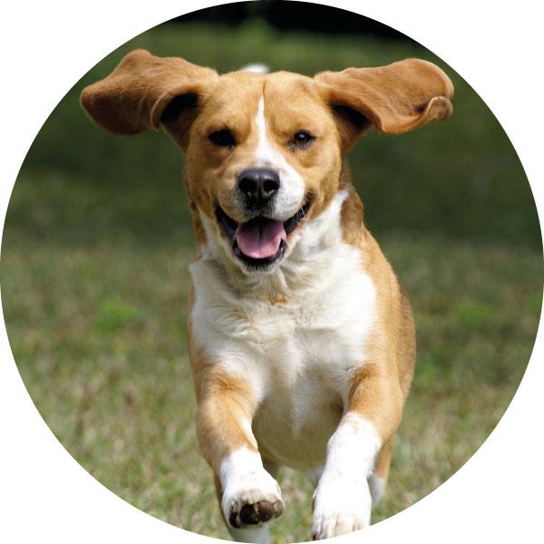 bungalow-type-D-hond